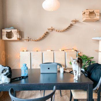 Kocia kawiarnia w Warszawie. Jak jest w Miau Cafe?